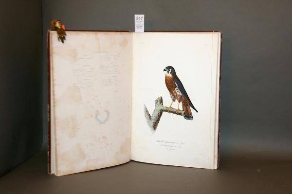 SAGRA, Ramon de la.  - - Album d'Oiseaux de Cuba réunis pendant le voyage de M.[...]